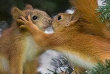ecureuil / Mes petits chouchous