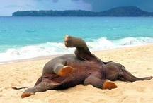 I love Elephants / by Cathy Thompson Sauer