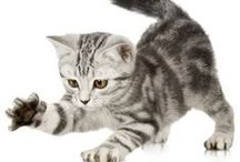 kočky / kočky, koťátka
