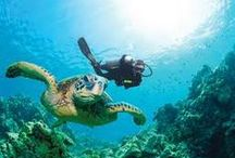 I Love Scuba Diving / World wide scuba adventures at http://exploretraveler.com