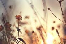 ▲ autumn ▲ / La fin de l'été, l'approche de l'hiver : une belle saison !
