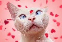 Funny Valentine / by Avanti Press