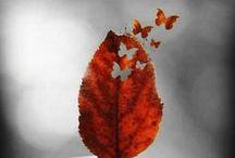 Autumn Time / Au cours des mois d'automne... Over the fall months...