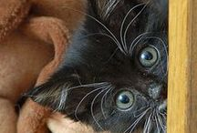 ♦ Black Cat ♦