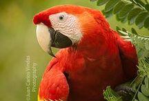 Animals,  Birds & other
