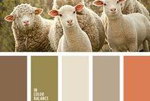 Animal color pallets