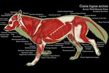 Anatomía / Animais