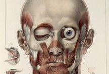 Anatomía / Cabeza