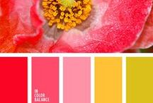 Beautiful poppy colors / Red poppy, pink poppy.