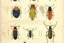 Entomology / Ecology, genetics, and biochemical behaviour of insects, conveyed with pictures.