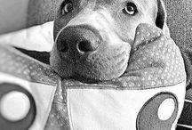 LIEBLINGShund Lab / Meine liebste Fellnase #linothesilverlab