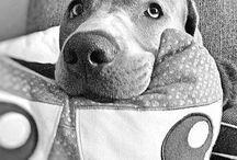LIEBLINGShund Lab / #linothesilverlab