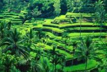 Ubud / The travel site TripAdvisor, announced its 2015 Travelers' Choice™ awards for Destinations based on reviews from its over a billion members. Ubud took the 15th place on the list. On the list of Top 25 Destinations for the Asia Region, Ubud is at the third place.