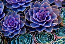 Cacti and Succulents / by The Spicy Texan