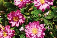 Garden - Flowers / by Newman