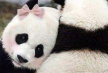 Panda lover / Fashion stuffs