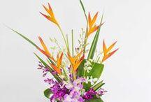 Hawaiian Flowers With Our Aloha / Hawaiian flower assortments sent fresh to any US state.  www.withouraloha.com