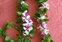 Hawaiian Vine and Leaf Leis / Local Hawaiian leaf leis made from wild gathered Hilo maile or ti leaves.  The long, open maile strand is often worn by men for weddings and graduation or other special occasion.