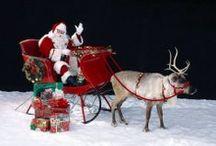 Alberi di Natale  / In ogni casa il suo Albero di Natale ..