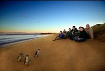 Places to Visit on Phillip Island / Some places everyone should visit on Phillip Island! / by Glen Isla House