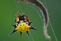 Inspiring Spiders / The magic of Creation imbibed in small creature!