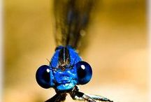 Inspiring Dragonflies / Beautiful and delicate acrobats of nature.