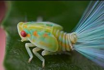 Inspiring Insects / One of nature's most incredible art instructors.