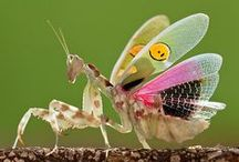 Inspiring Mantis / Nature's drops of intelligence live in action.