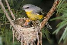 Inspiring Bird Nests / Nature's greatest architects.