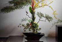 Inspiring Ikebana / A serene and aesthetic gift of Japan to the world.