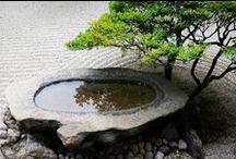 Inspiring Bonsai Trees / Unspoken quietude, patience and beauty.