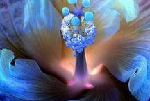 Inspiring Nature Close-ups
