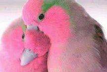 Ptaki i zwierzęta