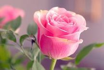 ✿ FLOWERS ✿