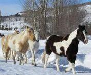 Vista Verde Ranch / Take a magical winter vacation at family-friendly Vista Verde Ranch