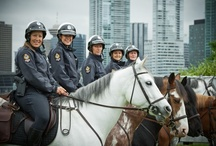 Mounted Unit / The Vancouver Police Mounted Unit has been patrolling Vancouver since 1908. The horses are often seen in Stanley Park, but they have taken on a much larger role in the management of crowds at demonstrations and large events throughout the city.