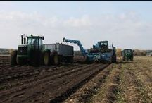 Fall Harvest 2014 / Fall Harvest in WI - Corn & Horseradish crops being harvested. #SilverSpringFoods #GIVEITZING™ @SilvSprngFoods / by Silver Spring Foods, Inc.