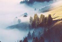 Forêt & bois / Woods / Nature / Environnement