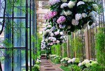 Jardim dos sonhos