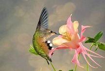 Uccelli Selvatici / Una raccolta di uccelli selvatici di ogni categoria: acquatici, canori, migratori e rapaci. Potete trovare le schede informative sul sito di Animali Volanti.
