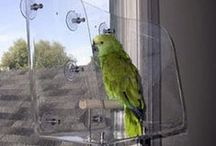 Idee per uccelli domestici