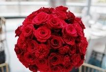 Roses Róże