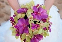 Orchids Storczyki