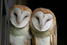 Owls love u / They are just adorable!
