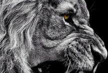 fierce animal
