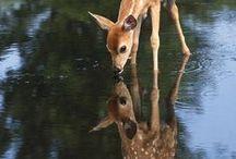 Mammals and