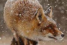 ΖΩΑ :: ANIMALS NoPinLimits / Πανιδα :: Fauna - Θηλαστικά : Χερσαία - Υδρόβια - Ιπταμενα = Μammals : Terestrial - Aquatic - Flying