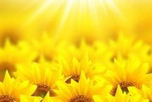 ΚΙΤΡΙΝΟ :: 1 :: YELLOW / Φωτεινο * Ανοικτο Κιτρινο :: Sunny * Pale Yellow