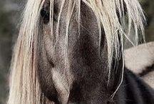 ΙΠΠΙKO :: EQUINE NoPinLimits / Ζεβρες - Ιπποι - Ονοι -Υβριδια : Zebras - Horses - Donkeys - Mules
