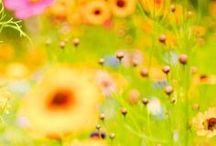 ΕΠΟΧΕΣ :: ΑΝΟΙΞΗ NoPinLimits / Seasons :: Spring - Xαρα της Zωης :: Joie de Vivre